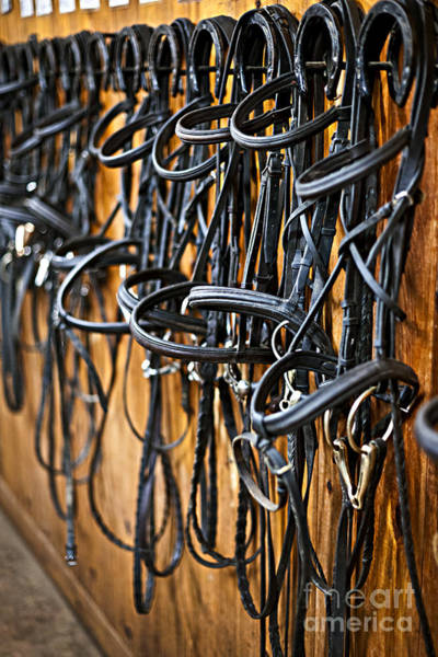 Horse Barn Photograph - Horse Bridles Hanging In Stable by Elena Elisseeva