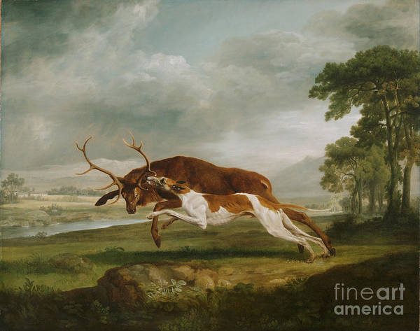 Wall Art - Painting - Hound Coursing A Stag by George Stubbs