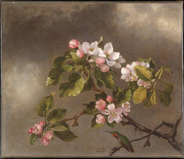Painting - Hummingbird And Apple Blossoms by Martin Johnson Heade