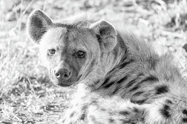 Wall Art - Photograph - Hyena by Paul Fell