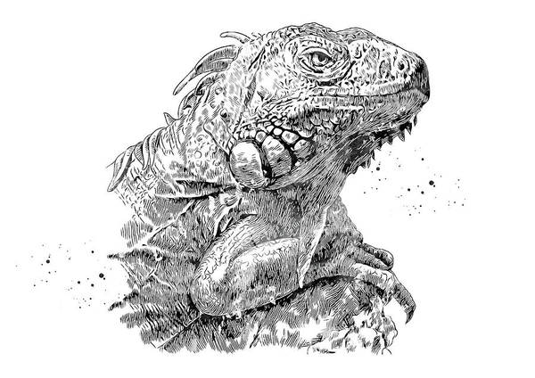 Iguana Digital Art - Iguana by Erzebet S