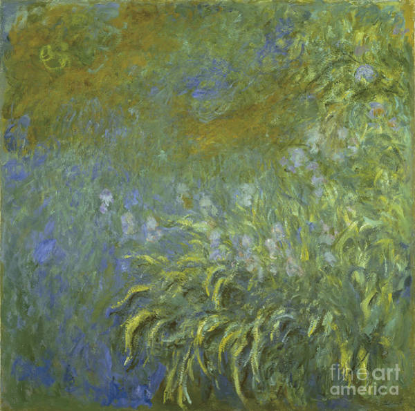 Painting - Iris by Celestial Images