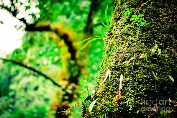 Photograph - Jungle Annapurna Yatra Himalayas Mountain Nepal by Raimond Klavins