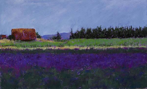 Pastel - Lavender Farm by David Patterson