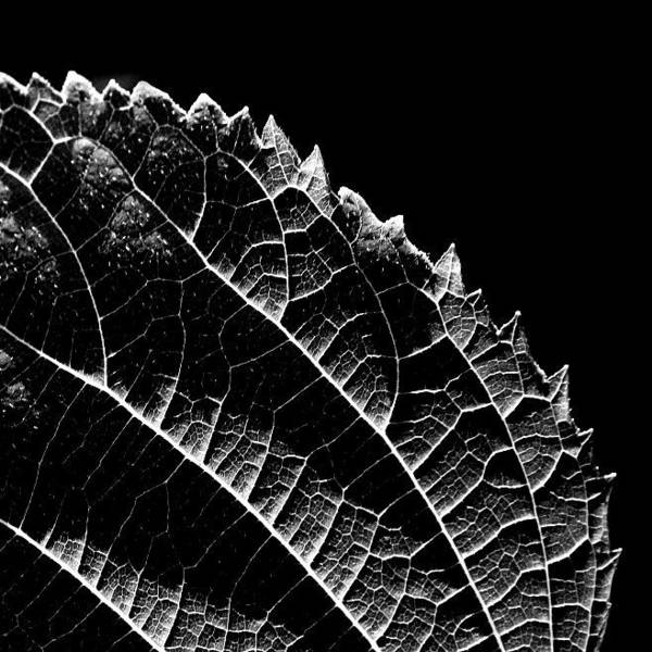 Wall Art - Photograph - Leaf by Jean-Francois  Dupuis