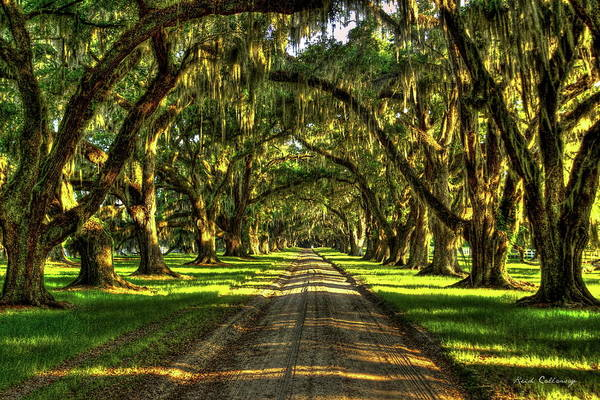 Photograph - Live Oaks Of Tomotley Plantation South Carolina Low Country Art by Reid Callaway