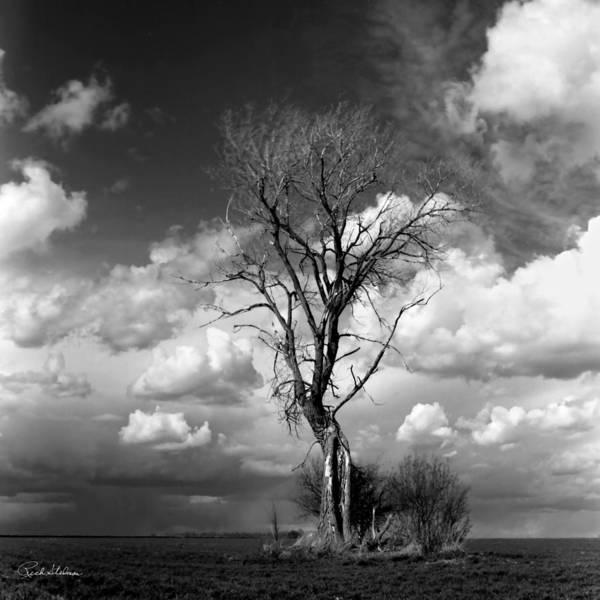 Photograph - Lone Tree by Rich Stedman