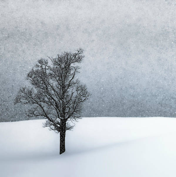 Wall Art - Photograph - Lonely Tree Idyllic Winterlandscape by Melanie Viola