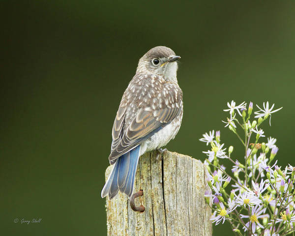 Photograph - Looking For Mom by Gerry Sibell