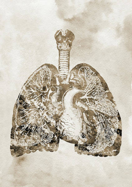 Lung Digital Art - Lungs And Heart X by Erzebet S