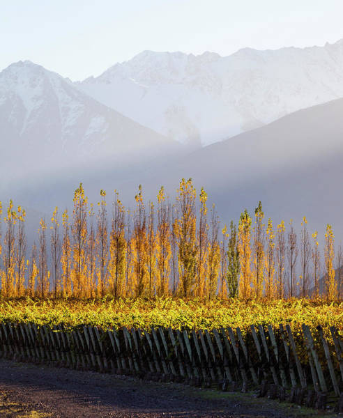Photograph - Mendoza Fields by Mercedes Noriega