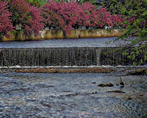 Rights-managed Wall Art - Photograph - Mill River Park by Anthony Dezenzio