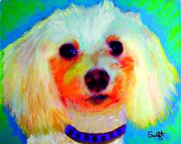 Maltipoo Wall Art - Painting - Mixed Breed Dog by Char Swift