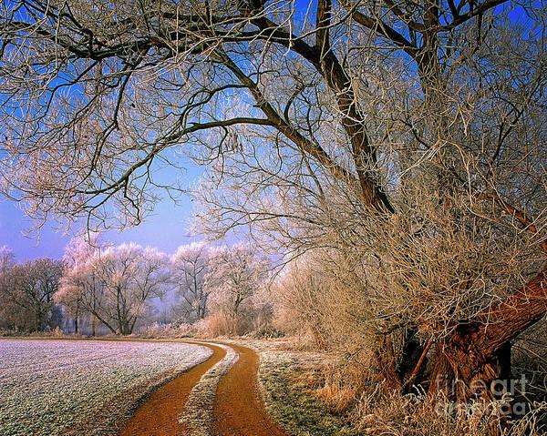 Photograph - Morning Glory by Edmund Nagele