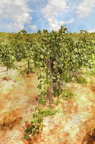 Photograph - Napa Vineyard In The Spring by Brandon Bourdages