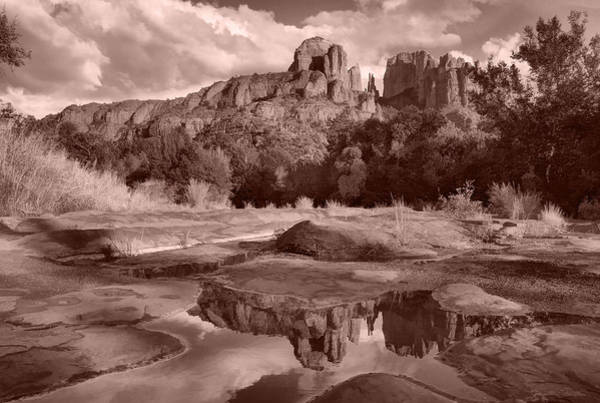 Photograph - Nature's Cathedral by Leda Robertson