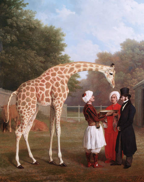Painting - Nubian Giraffe by Jacques-Laurent Agasse