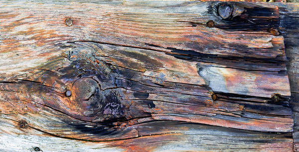 Rot Photograph - Old Wood by Tom Gowanlock