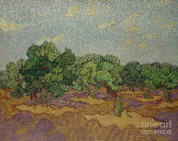 Wall Art - Painting - Olive Trees, 1889 by Vincent Van Gogh