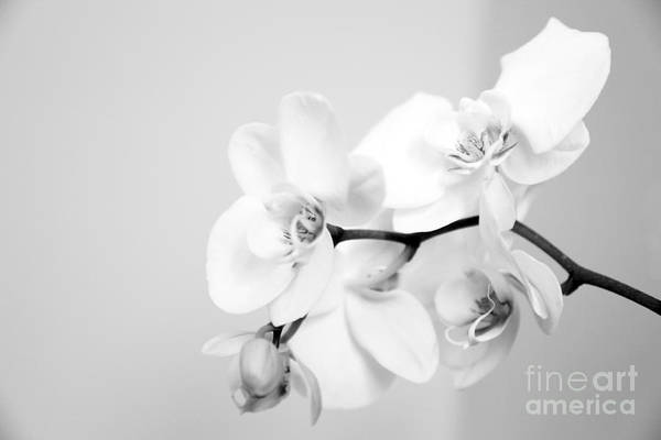 Orchid Digital Art - Orchid by Amanda Barcon
