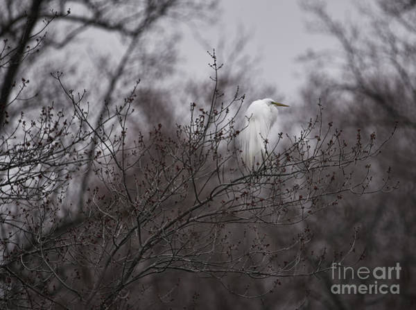 Brinton Photograph - Out On A Limb by Judy Wolinsky