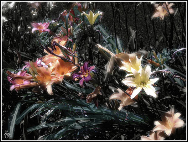 Photograph - Painted Lilies by Wayne King