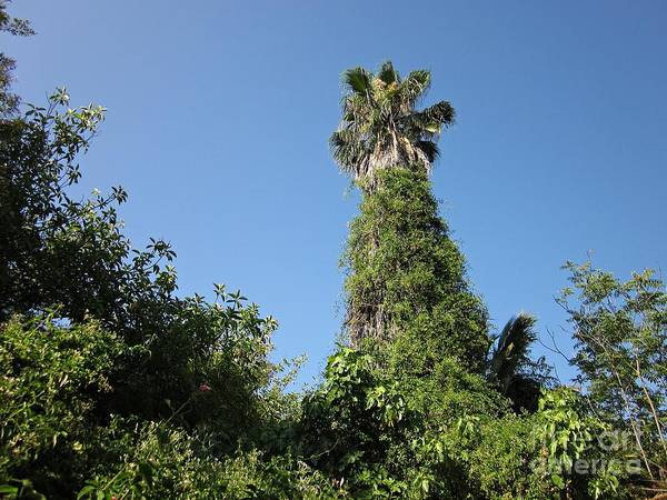 Photograph - Palm Tree And Wilderness In Torremolinos by Chani Demuijlder