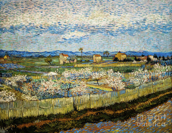Painting - Peach Trees In Blossom by Vincent Van Gogh