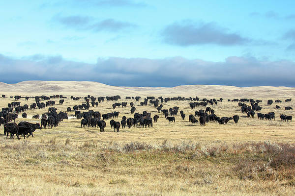 Wall Art - Photograph - A Herd Gathers by Todd Klassy