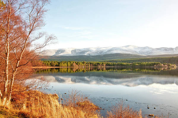 Photograph - Aviemore by Gouzel -