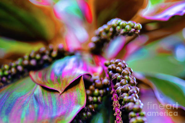 Plants And Flowers In Hawaii Art Print by D Davila
