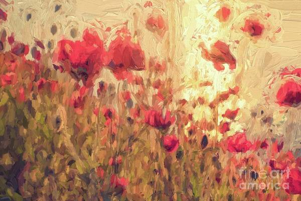 Wall Art - Digital Art - Poppy Flowers At Sunset by Patricia Hofmeester