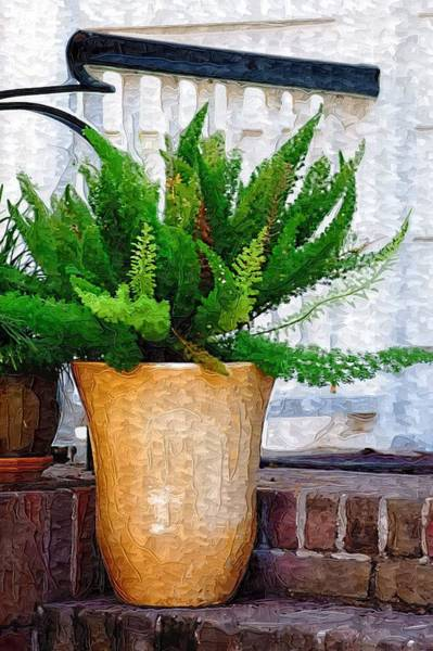 Photograph - Potted Plant by Donna Bentley