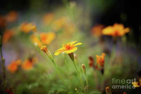Wall Art - Photograph - Pretty Flower by Kati Finell