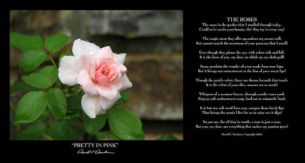 Photograph - Pretty In Pink by David Dunham