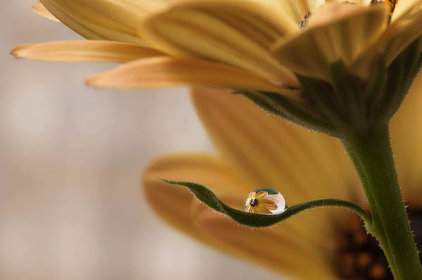 Droplet Photograph - Protected by Heidi Westum
