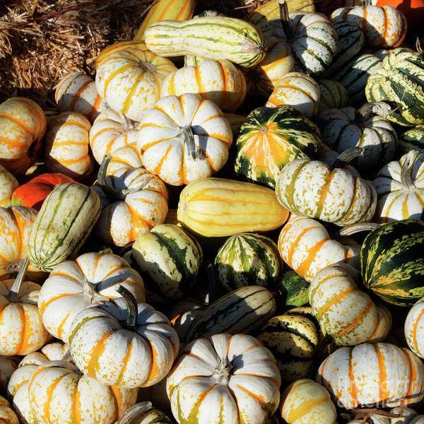 Photograph - Pumpkins by Jesse Watrous