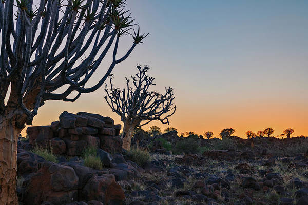 Wall Art - Photograph - Quiver Tree Forest - Namibia by Joana Kruse