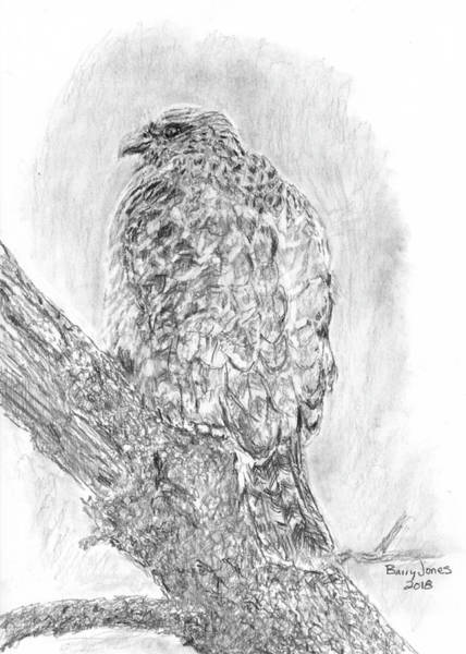 Drawing - Red-shouldered Hawk by Barry Jones