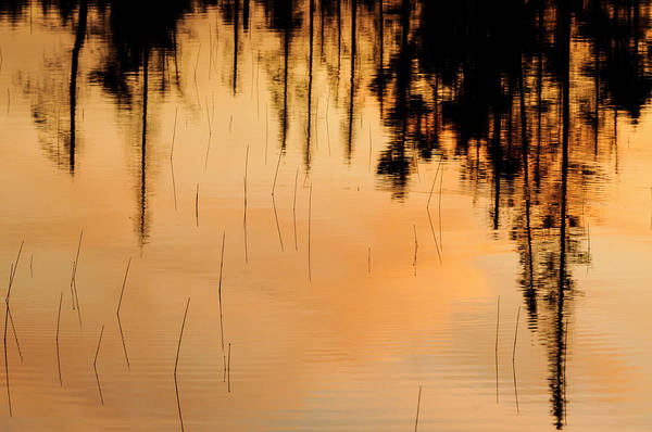 Photograph - Reflections by Bob Grabowski