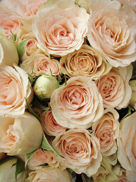 Wedding Bouquet Photograph - Rose Blush by Jessica Jenney