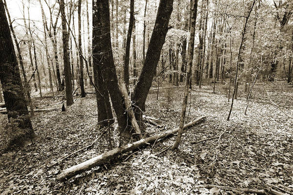Photograph - Scenic Forest Trees From East Texas Photograph Picture Fine Art  by M K Miller