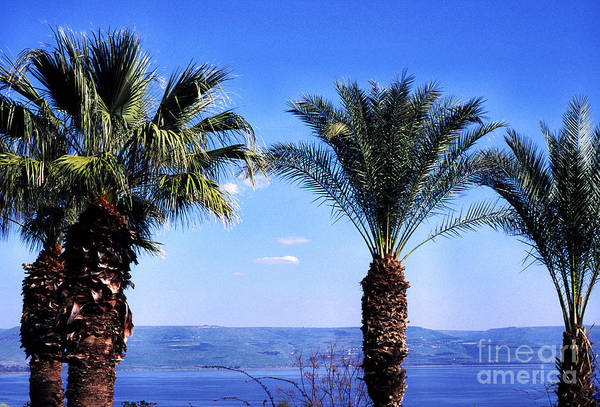 Photograph - Sea Of Galilee From  Mount Of The Beatitudes by Thomas R Fletcher