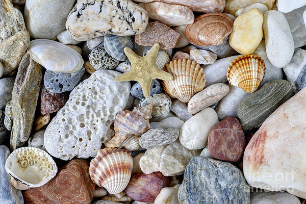 Wall Art - Photograph - Sea Pebbles With Shells And Starfish by Michal Boubin