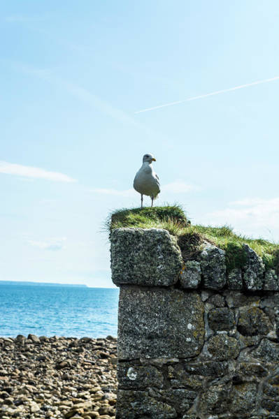 Twitcher Wall Art - Photograph - Seagull.   by Angela Aird