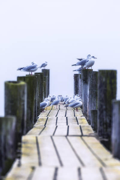 Fishing Line Photograph - Seagulls by Joana Kruse