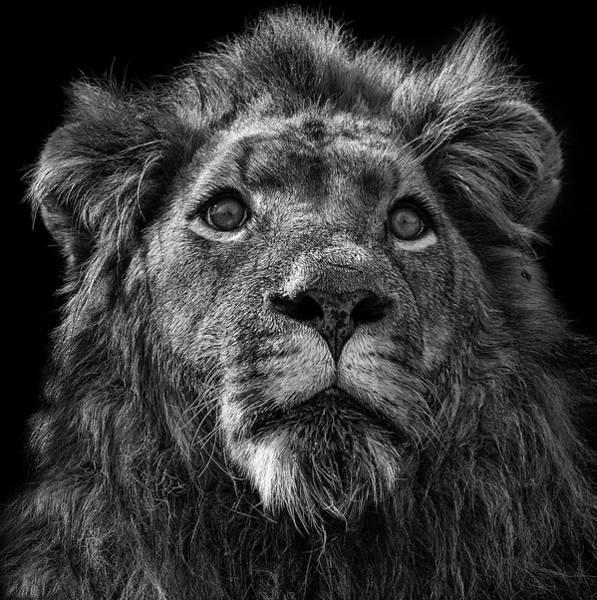Wall Art - Photograph - Simba by Paul Fell