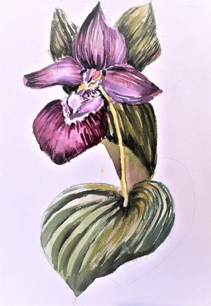 Wall Art - Painting - Slipper Foot Orchid by Mindy Newman