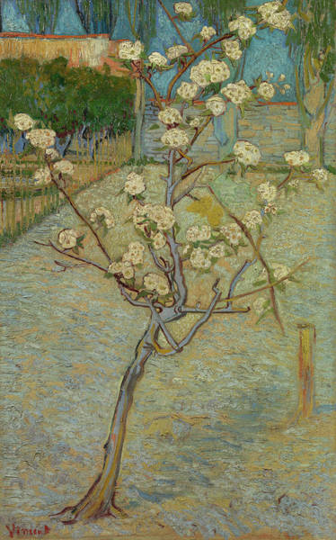 Almond Painting - Small Pear Tree In Blossom by Vincent van Gogh