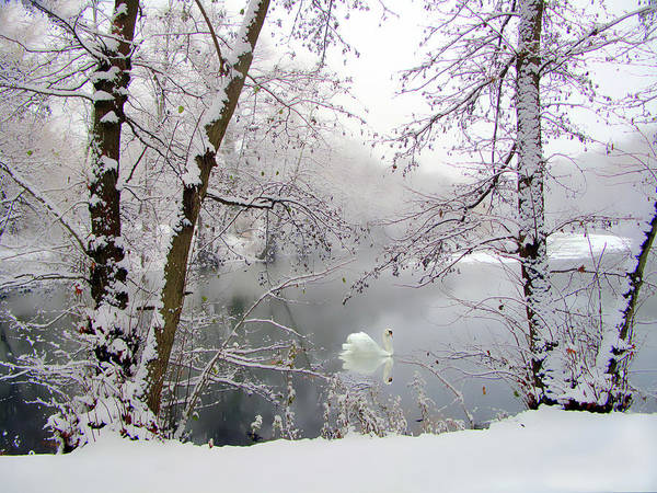 Wall Art - Photograph - Snow Swan by Jessica Jenney